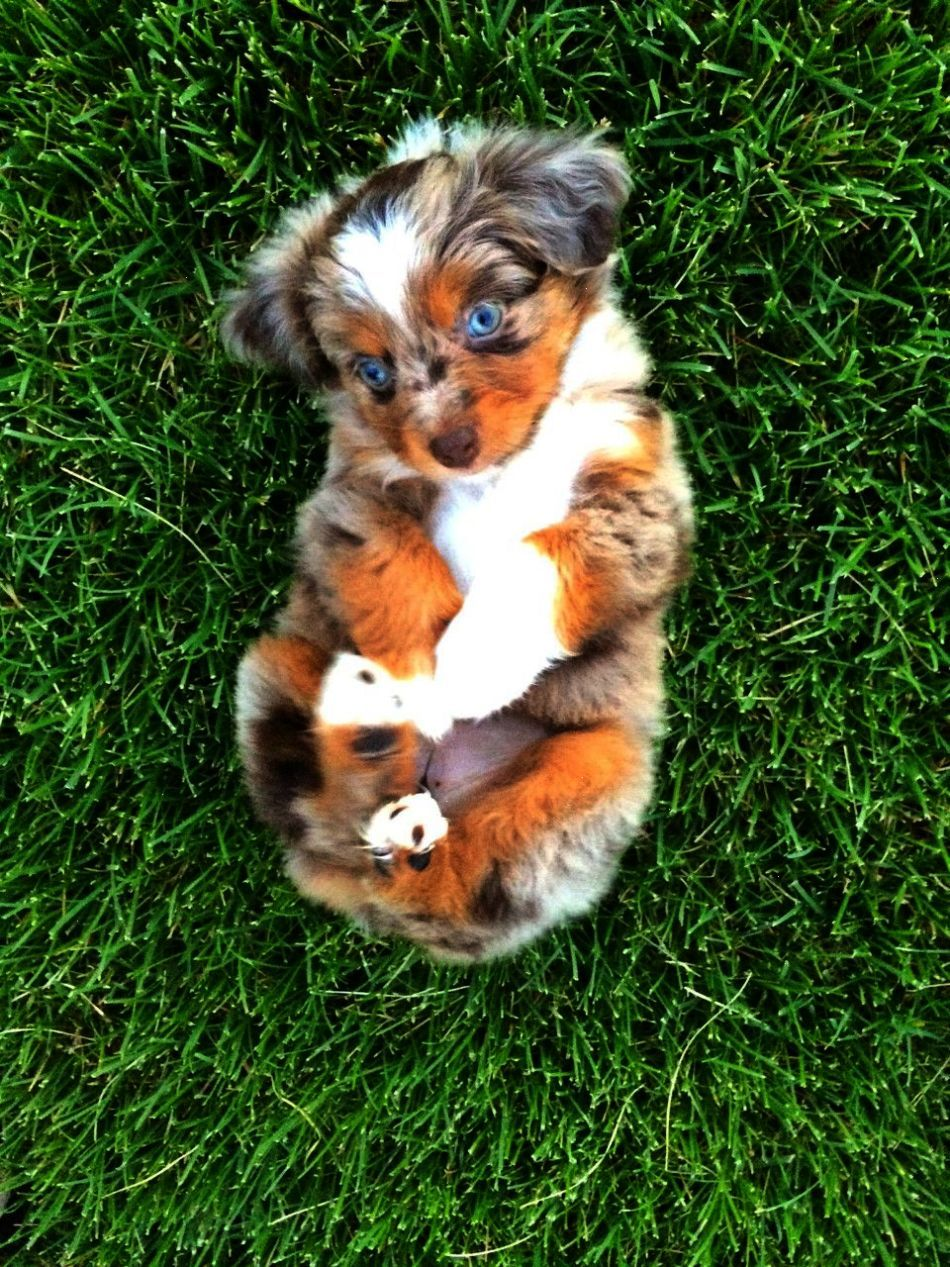 No Way Kittens Near Me For Free Valuable Cute Animals Cute Dogs And Puppies Cute Animal Pictures