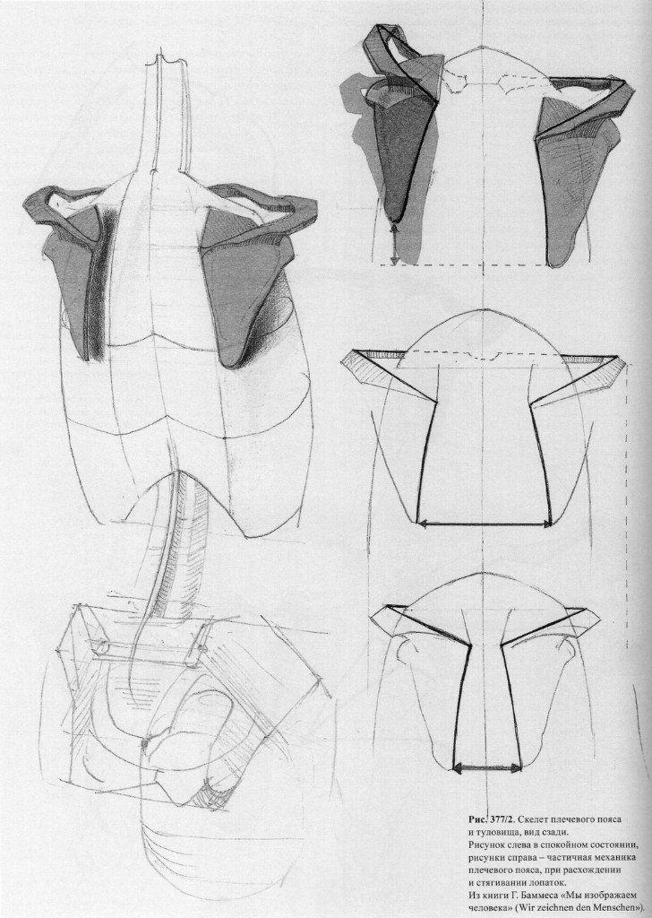 Gottfried Bammes | Anatomy Drawing | Pinterest