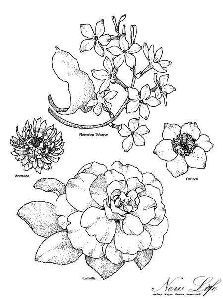 Цветочные рисунки для росписи, батика и витража   Stitch   Pinterest