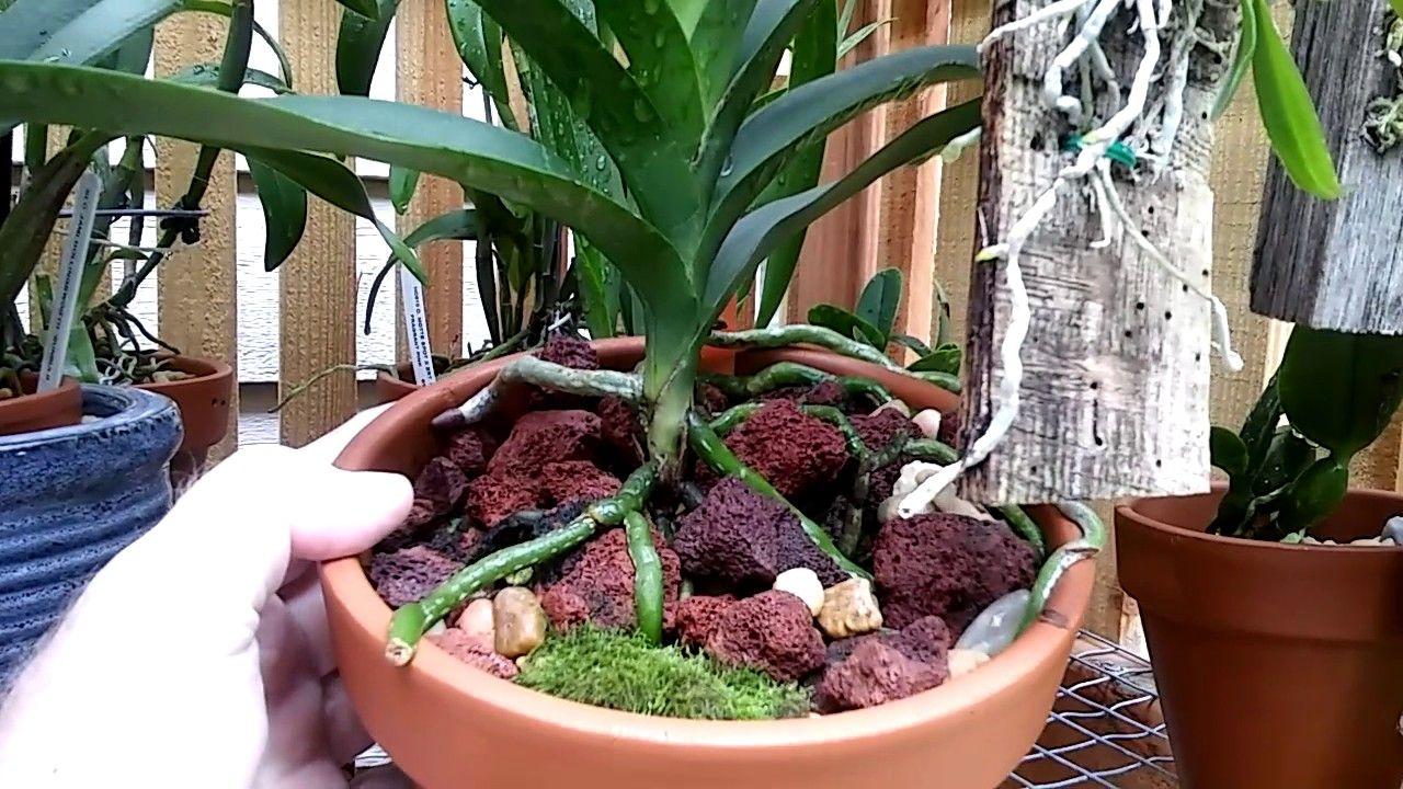 River rock lava rock lecca beadsr orchids pt orchids