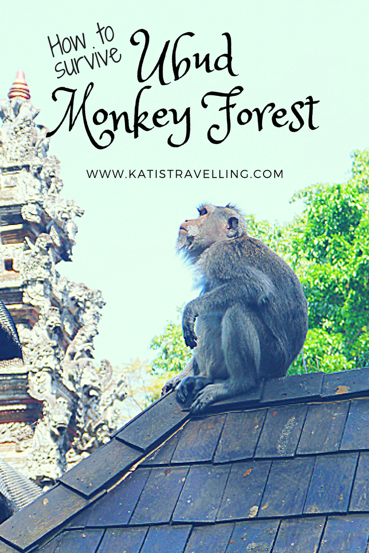 Surviving the Ubud Monkey Forest in Bali Things To Do