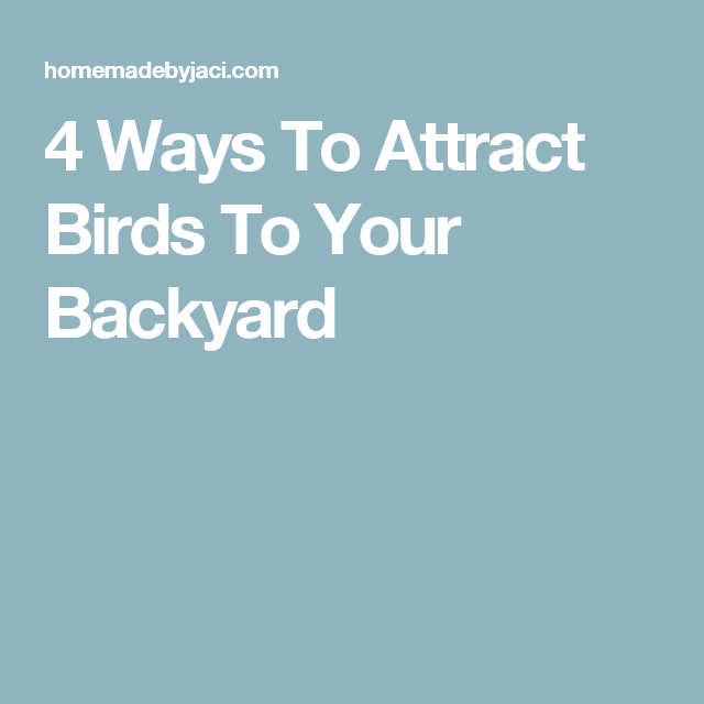 4 Ways To Attract Birds To Your Backyard