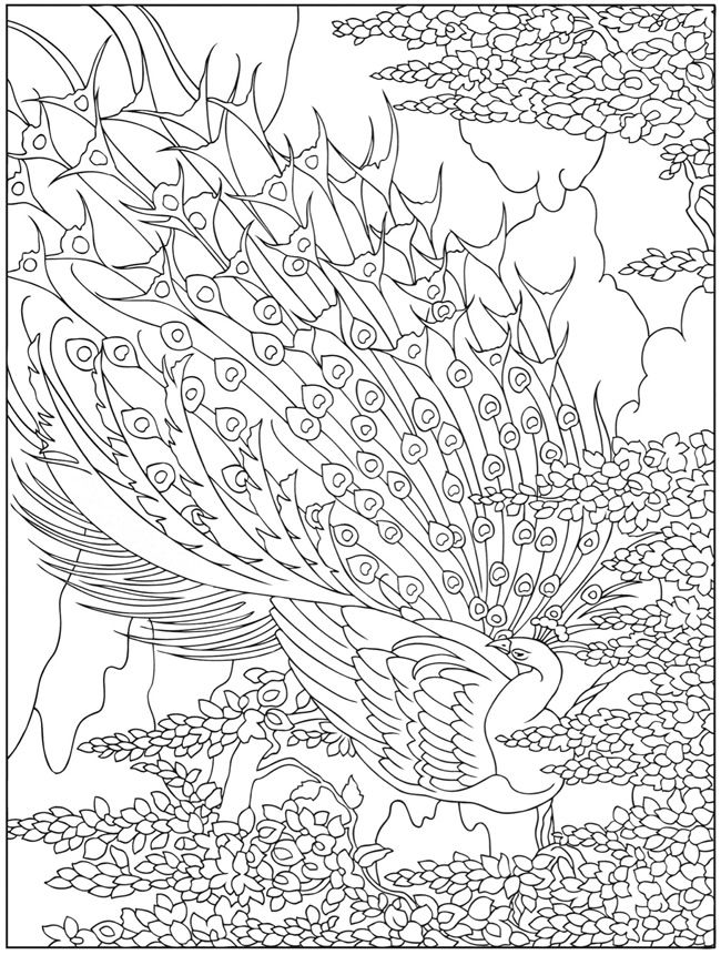 Creative Haven Peacock Designs Coloring Book | Coloriages Animaux ...