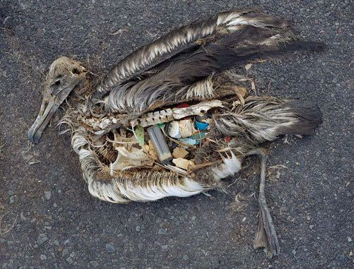 This heart aching photo by Chris Jordan shows a series of bird carcasses decomposing from the Great Pacific Garbage patch. This haunting collection of his shows what adult birds are feeding to their young: plastic, bottlecaps, lighters, basically, rubbish.