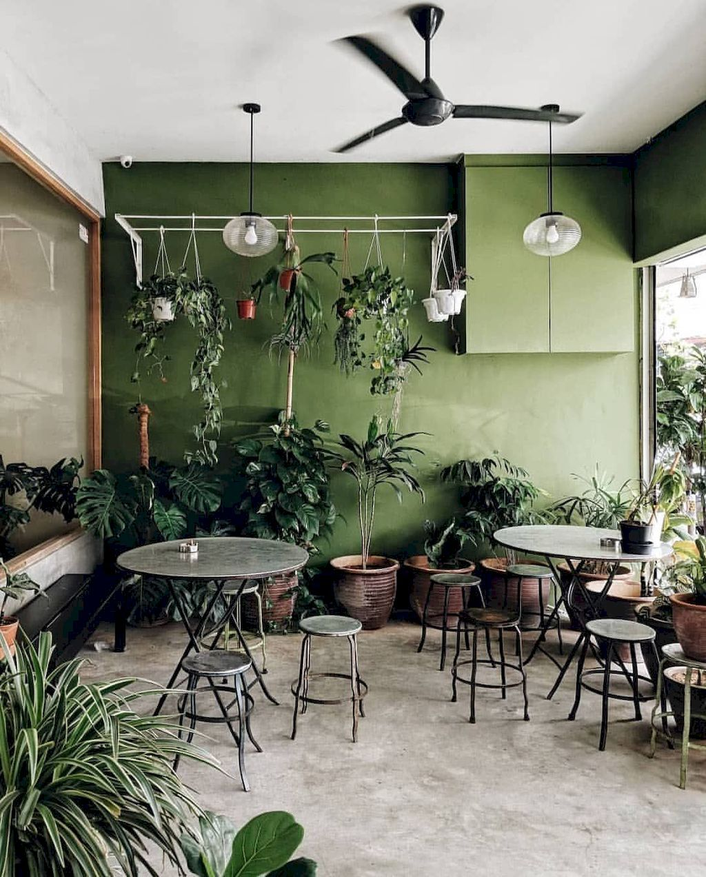Normous Inspiration Types Of Home Ornamental Plants That Can Cool