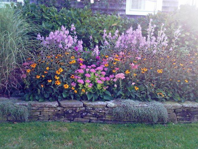 Nantucket Gardens | Black Eyed Susans (the Yellow Flowers)