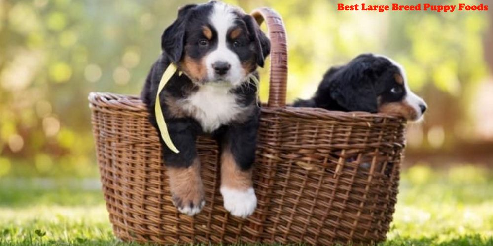 high protein puppy food for large breeds