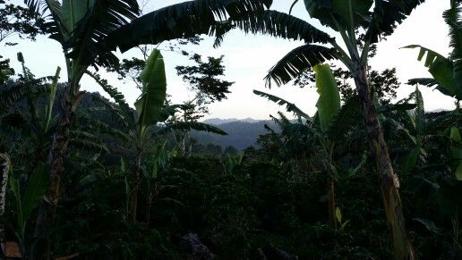 A day in the #Coffee Farm #Jinotega #Nicaragua #Tropical #secluded #EcoEscape www.Nica.Travel #TheClymb