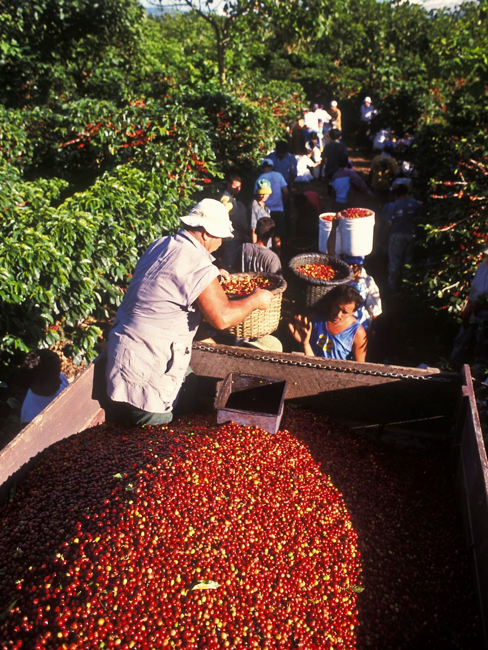 Coffee region - Costa Rica has a tradition of exporting one of the best coffees in the world. #coffee #coffeebeans