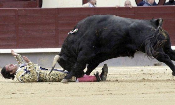 olé! Madrid, sospesa la corrida: incornati tutti i toreri