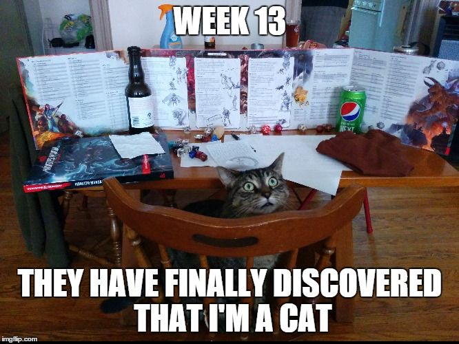 Week 13 They Have Finally Discovered That I M A Cat Image Tagged