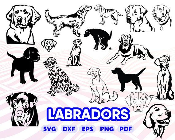 Labrador Retriver Svg Puppy Svg Golden Retriever Svg Labrador