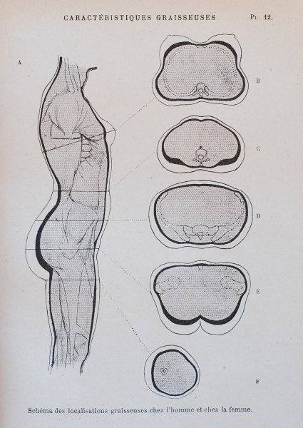 Nouvelle Anatomie Artistique Du Corps Humain Vol Ii