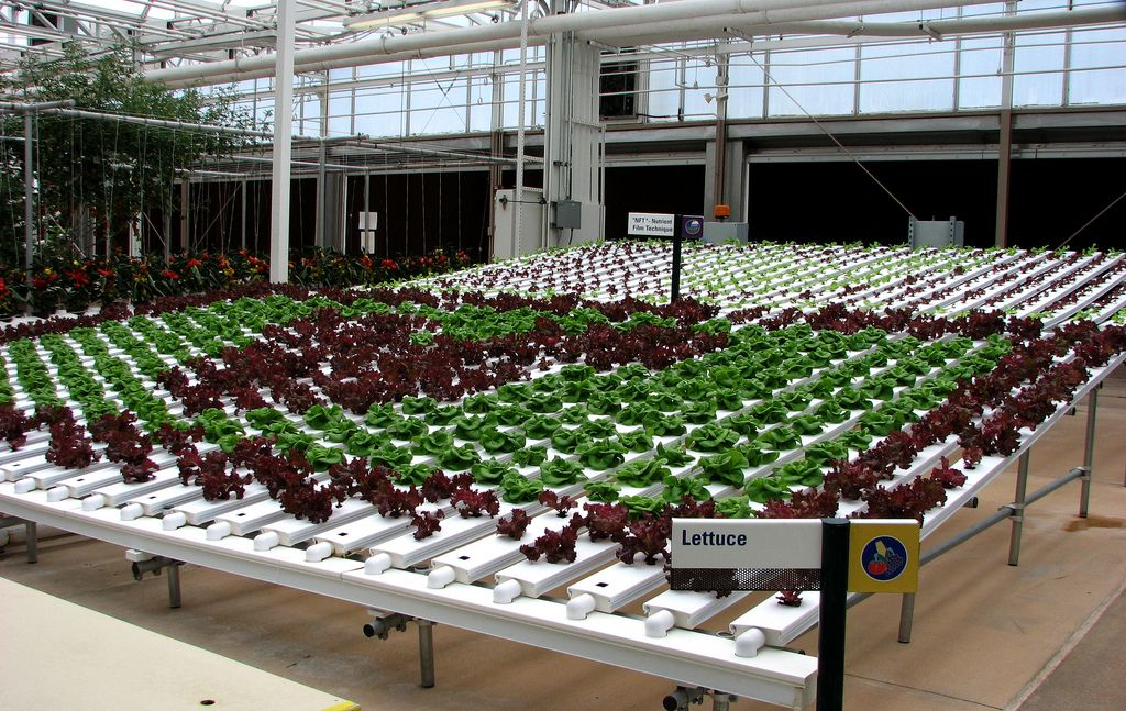 Colorful Hydroponic Lettuce Varieties At The Land Exhibit At Epcot