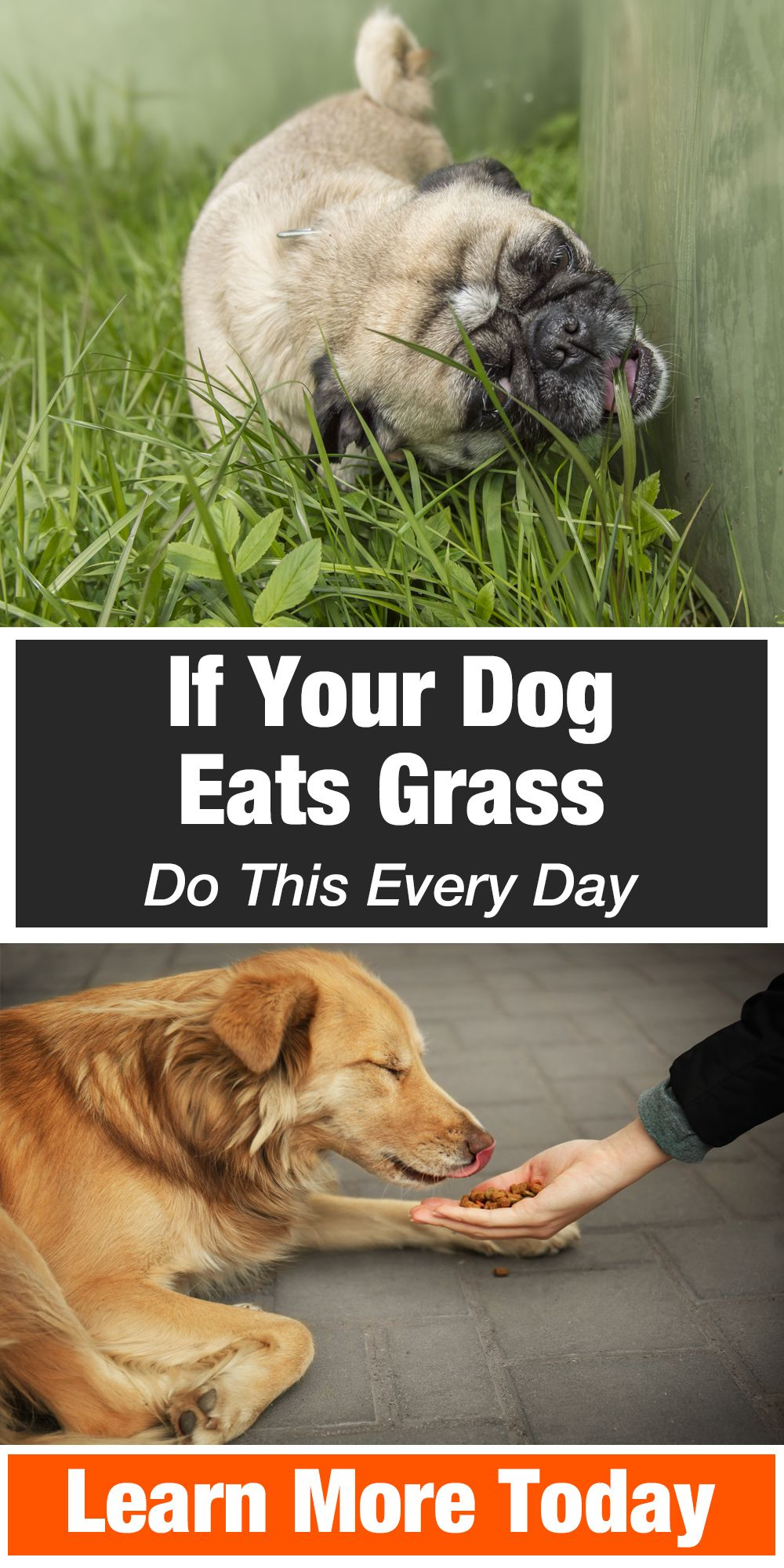 If Your Dog Eats Grass Do This Every Day Dog Remedies Silly Dogs Dogs