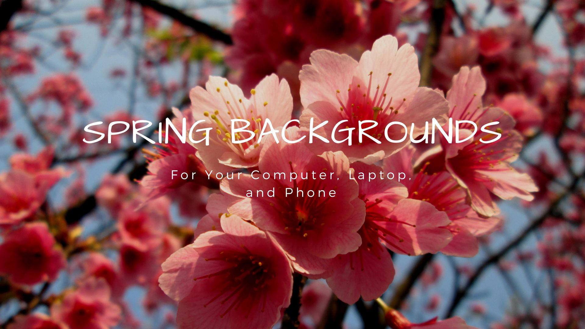 23 Beautiful Spring Wallpapers For Your Desktop Free Spring Wallpaper Spring Wallpaper Wallpaper