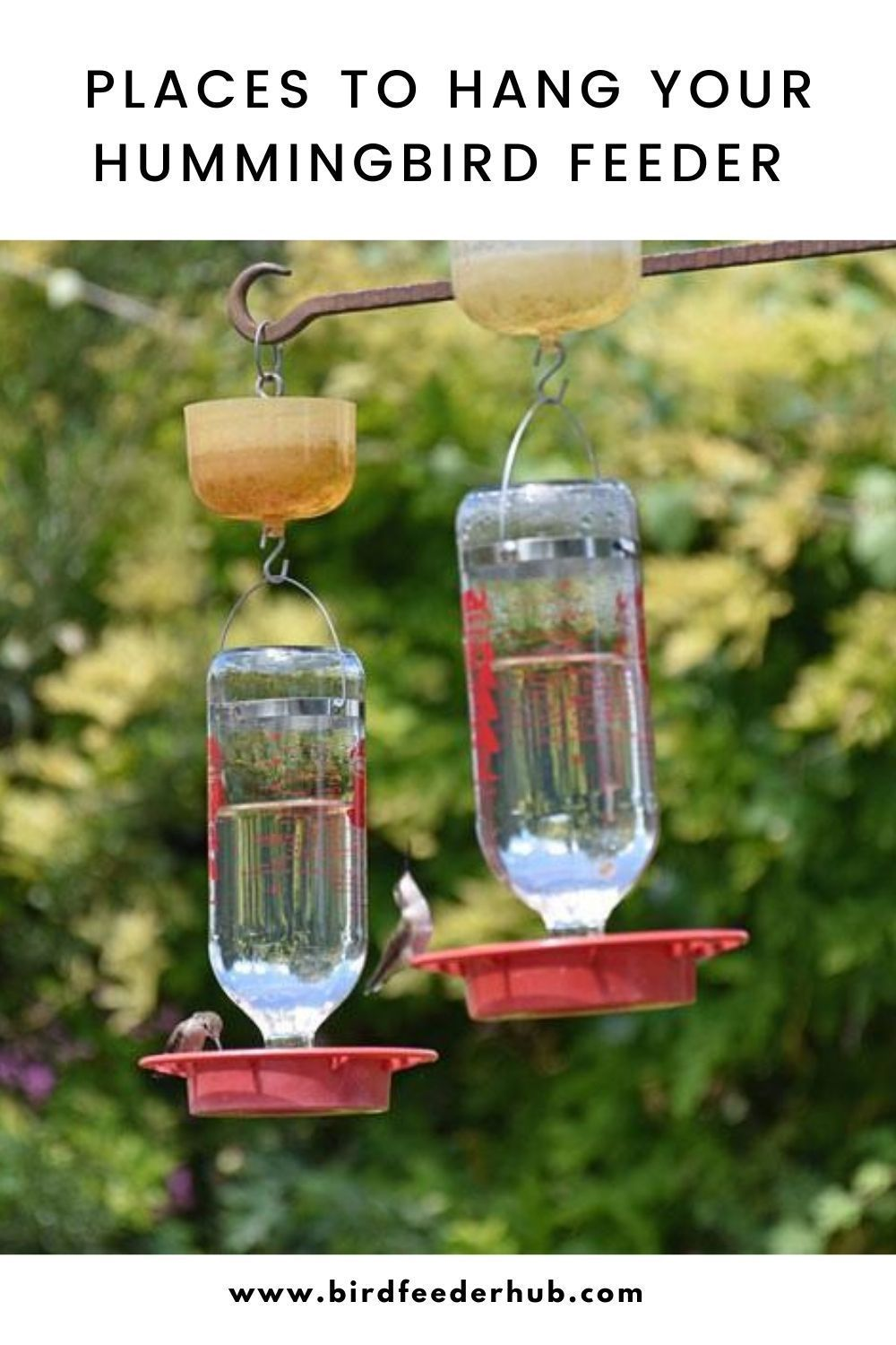 Places To Hang Your Hummingbird Feeder in 2020 Humming
