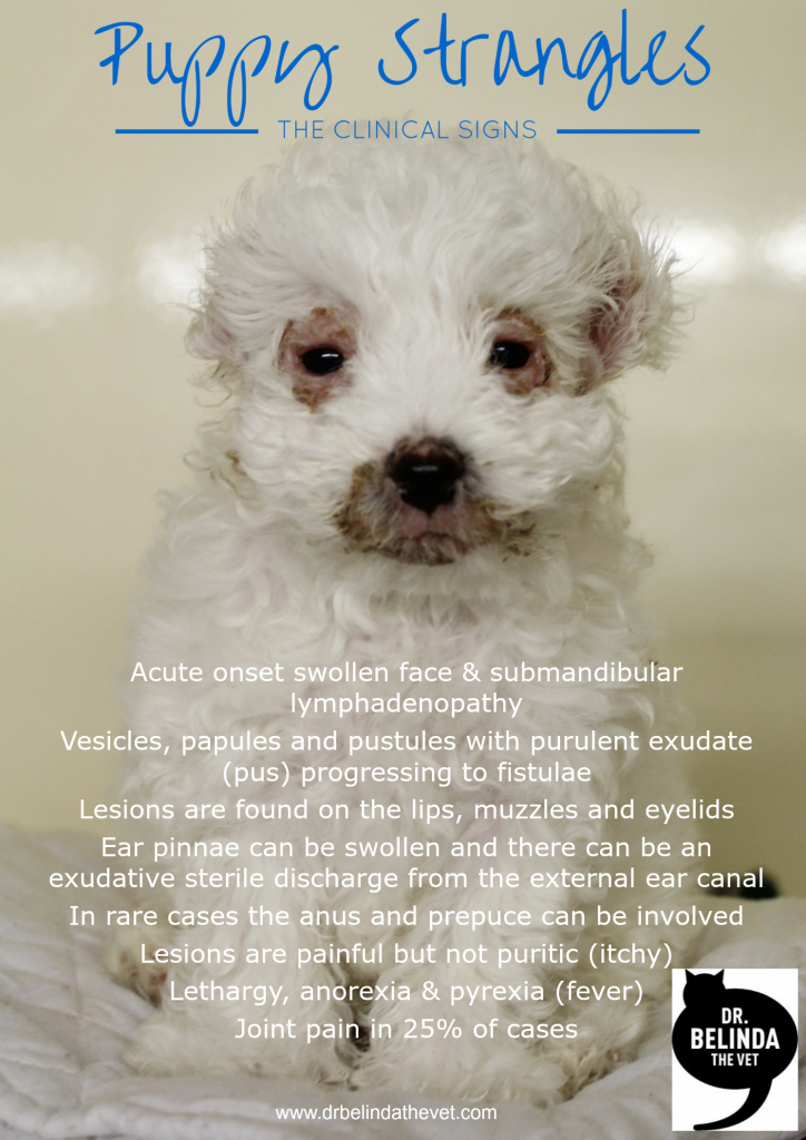 The Clinical Signs Of Puppy Strangles Read About This Life Threatening Condition In Puppies Puppies Vets Dog Blog