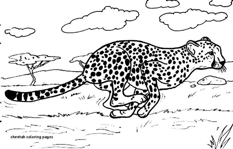Collection Of Cheetah Coloring Pages Ideas Free Coloring Sheets Animal Coloring Pages Zoo Animal Coloring Pages Coloring Pages