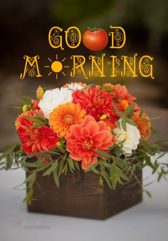 60+ Most Beautiful Good Morning images with Flowers