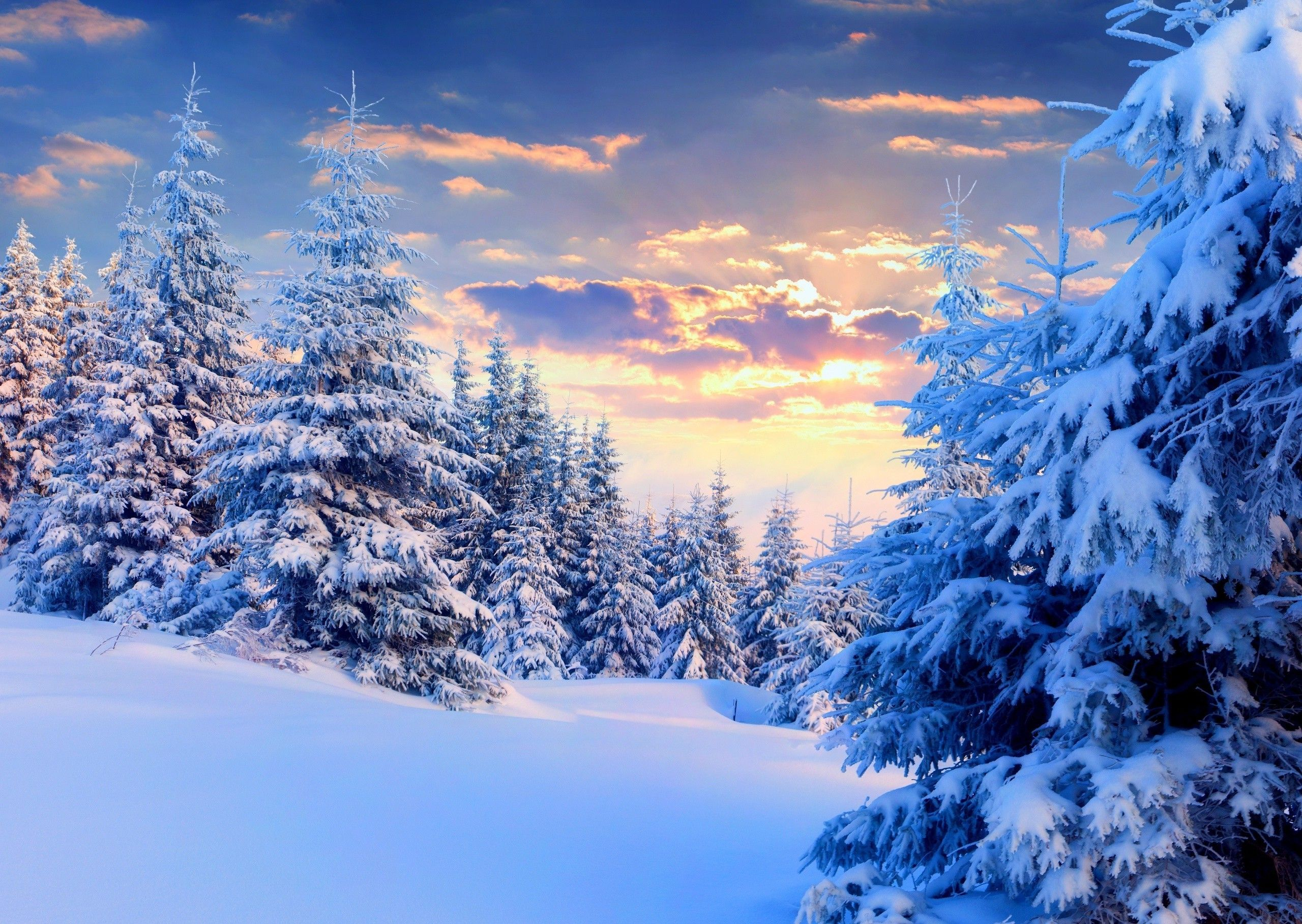 Nature Landscape Snow Winter Forest Trees Sunset Pine Trees Wallpaper And Background Snow Forest Winter Trees Winter Forest