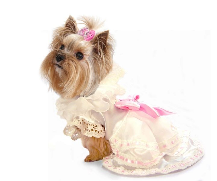 Dogs In Wedding Dresses Images