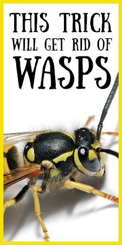 how to get rid of wasps with vinegar