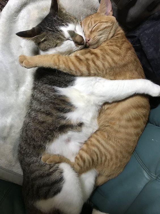 Photo of Los gatos domésticos también son miembros importantes de la familia – Página 24 de 58 – Sciliy