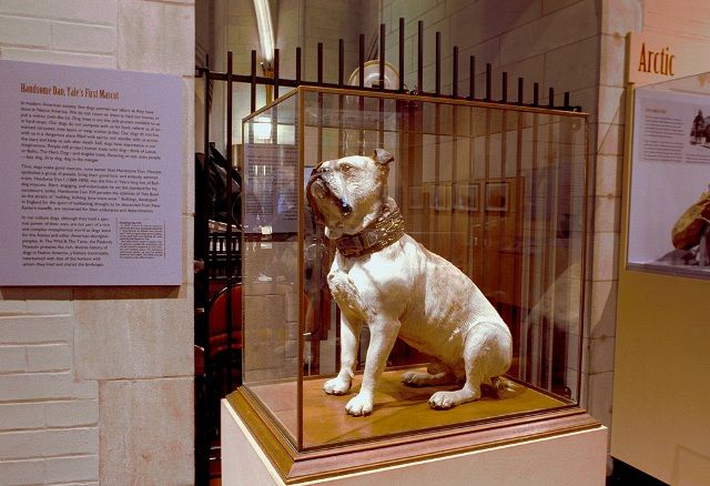 20 Things Only A Yale Bulldog Would Understand Yale Bulldogs