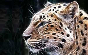 Image detail for -Free Download Digital Big Cats 2Desktop Wallpaper | Digital Big Cats ...