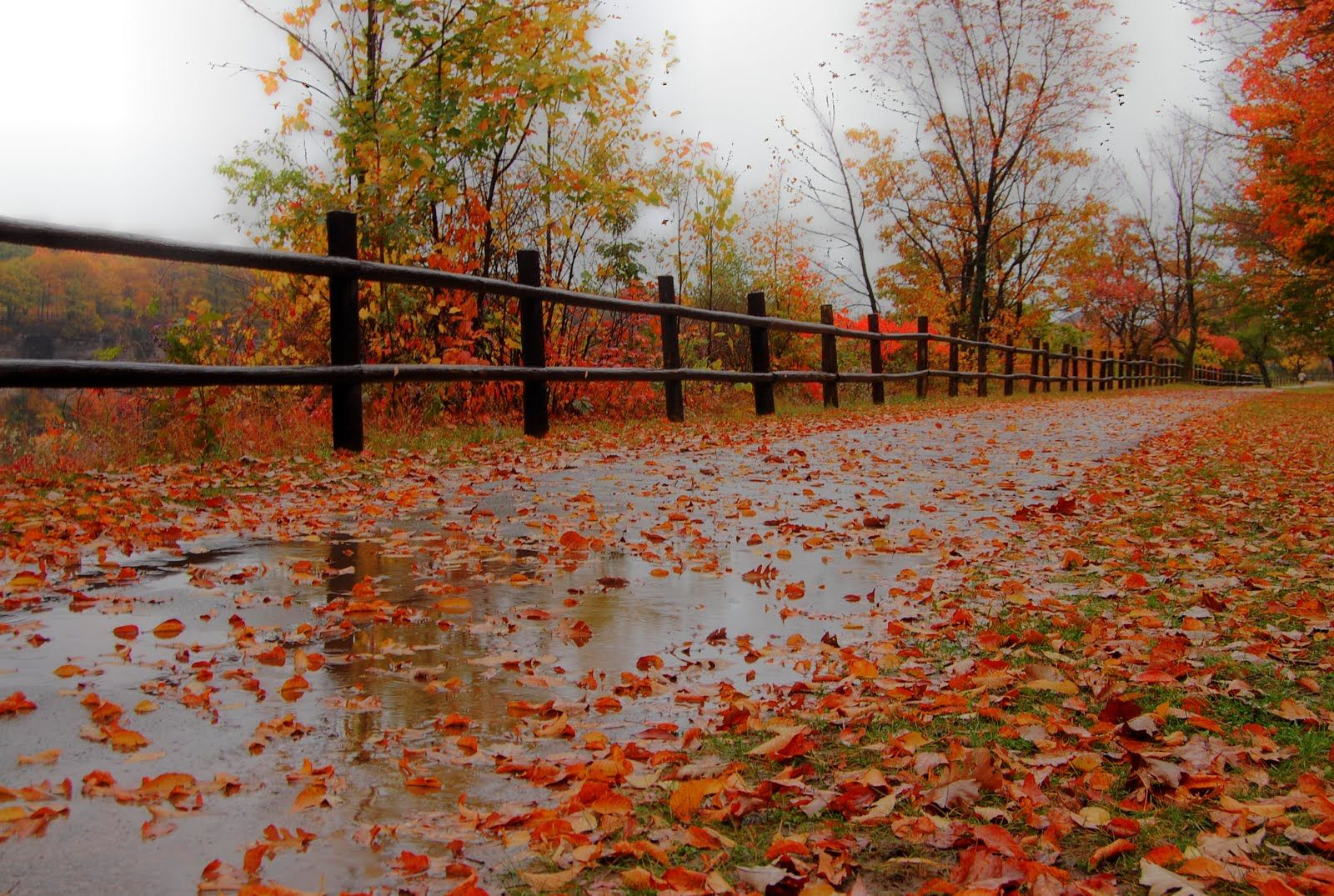 Fall Cottage Wallpaper Rainy Day Pictures Of Fall Rainy Fall Day I Went Out On