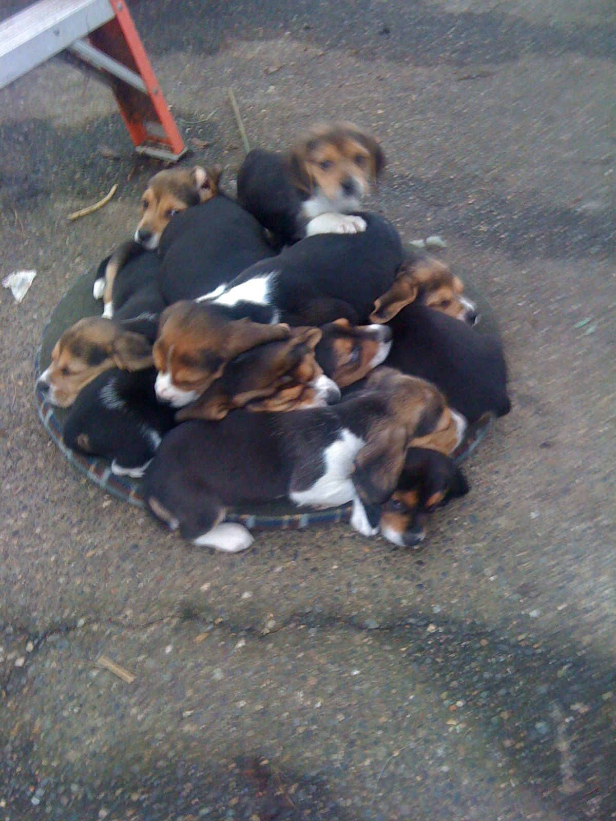 Dog Pile Lol Puppies Cute Animals Doggy