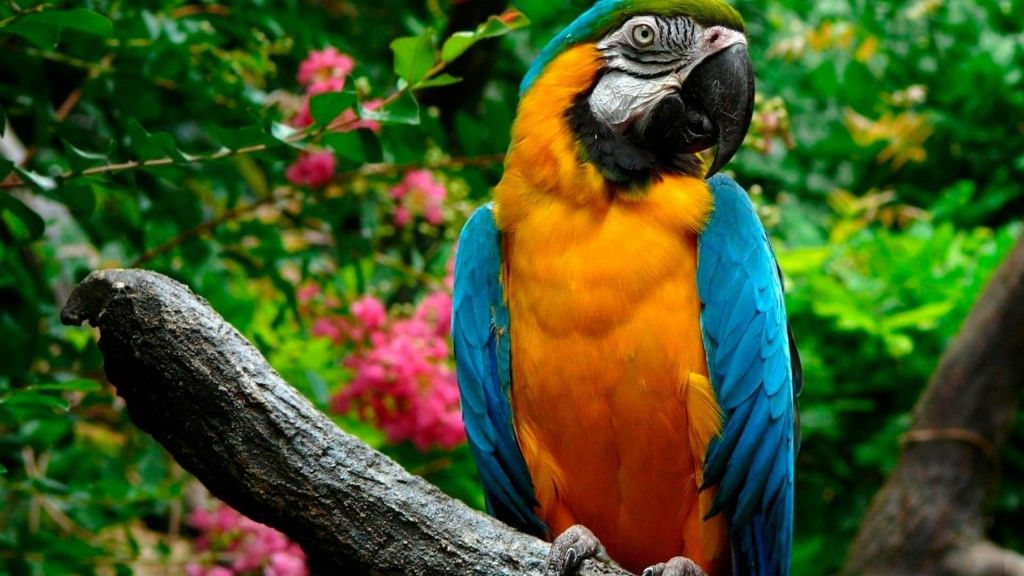 Macaw Hd Wallpapers Parrot Wallpaper Colorful Parrots Parrot