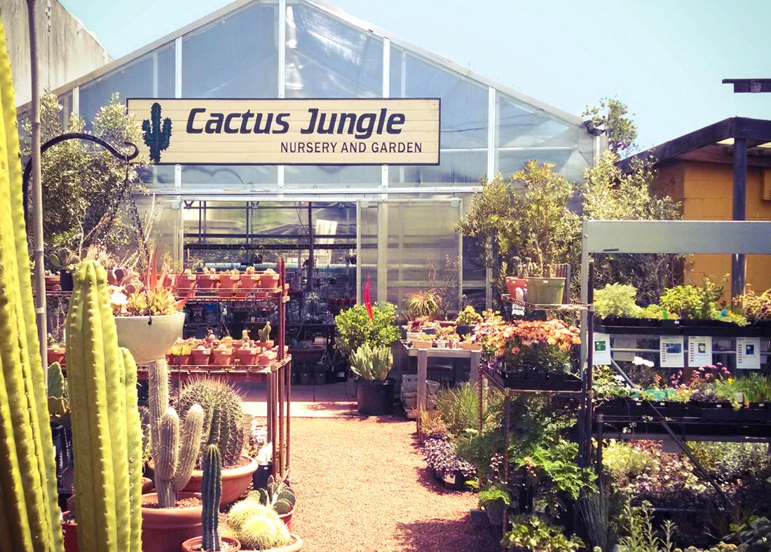 Cactus Jungle In Berkeley Ca Sells More Than Just Cacti And