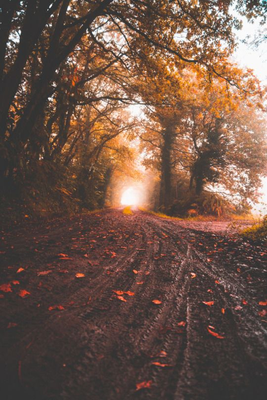 Https Www Tumblr Com Dashboard Autumn Photography Landscape Autumn Aesthetic