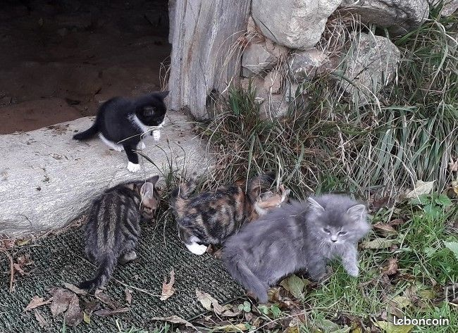 5 Chatons A Donner Chaton A Donner Animaux Chaton