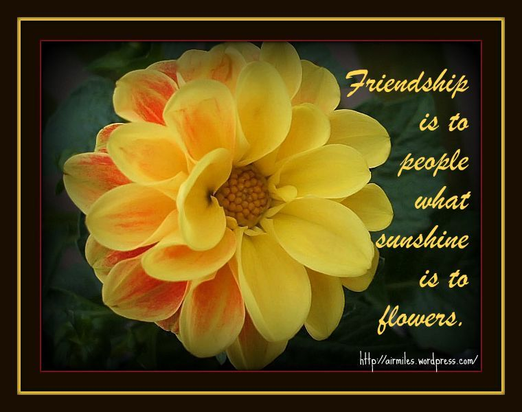Flower Quotes About Friendship. QuotesGram by quotesgram