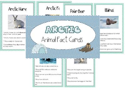 arctic animal cards freebie! Arctic animals, Arctic