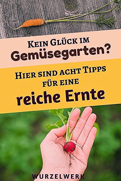 Photo of Kleiner Garten, große Ernte! 8 Tipps für einen produktiven (Mini)Garten – Wurzelwerk