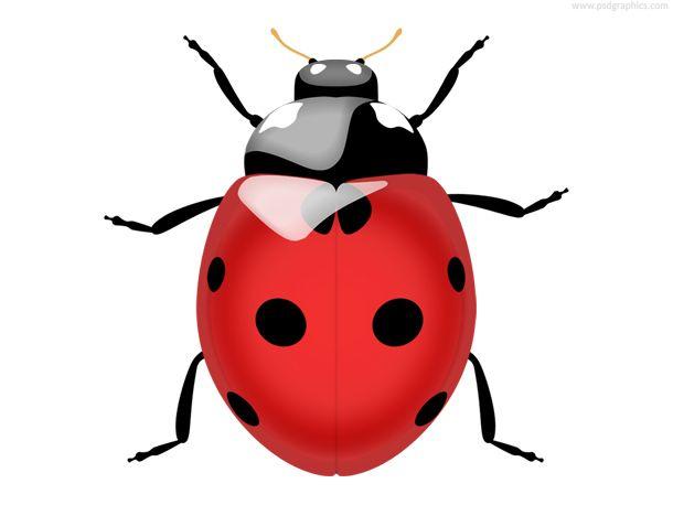Ladybug Icon Psd Psdgraphics Ladybug Png Images Image