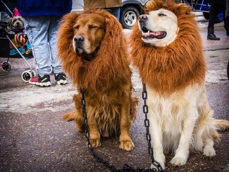 Manitou Carnivale Parade 2/6/16 Paparazzi Photography