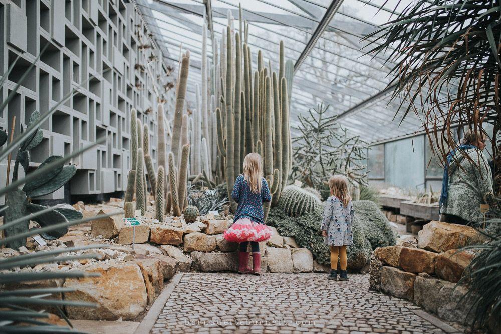 Kids In Desert Greenouse Wusten Gewachshaus Bei Planten Un Blomen