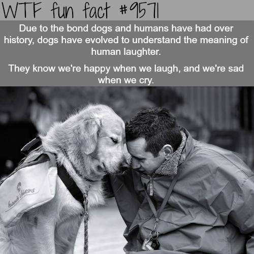 human and dog bond wtf fun fact