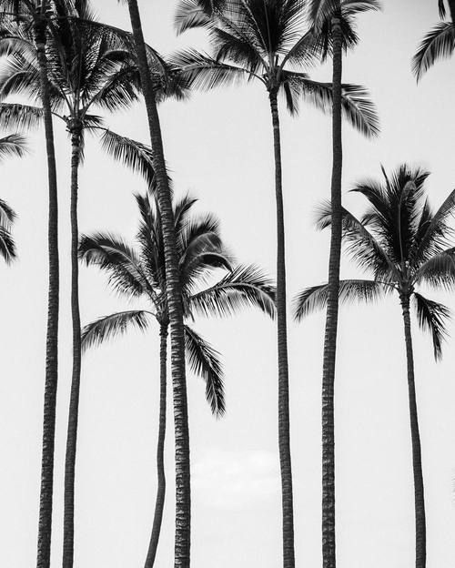 palm trees, pretty, and aesthetic image (With images