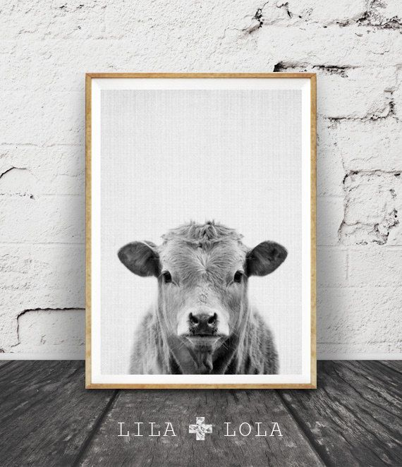 cow print nursery farm animal wall art black and white printable photo digital download large poster farmhouse decor modern minimalist