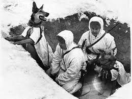 Джульбарс | Military dogs, Military working dogs, War dogs