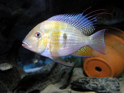 Bedn T 0810 Fish Photography Secrets Tfhmagazine Com Details
