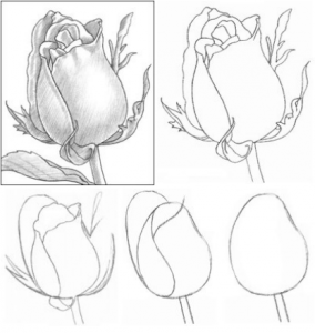 21 Gambar Bunga Mawar Dengan Pensil Warna Pensil Mawar Untuk Anak Anak Cara Menggambar Bunga Mawar Download Ane Gambar Bunga Pensil Warna Menggambar Bunga