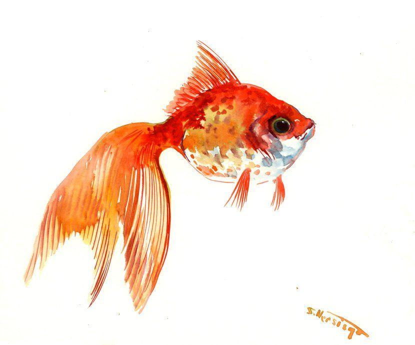 Children Room Art Goldfish Artwork Original Watercolor Painting