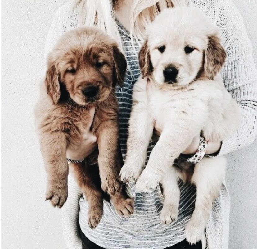 Pin By Sally Bailey On Want Need Love Puppies Cute Animals Animals Friends